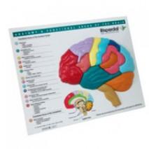Brain Puzzle on Board